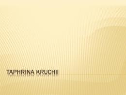 TAPHRINA KRUCHII