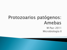 Amebas - Microinmunoumg's Blog | Just another …