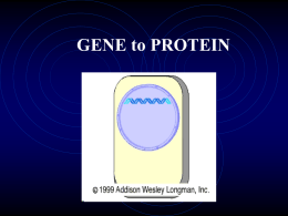 GENE to PROTEIN - Jefferson County Public Schools