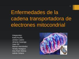 Enfermedades de la cadena transportadora de electrones