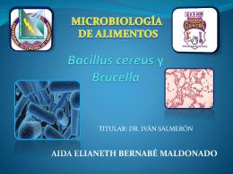 Bacillus cereus Brucella - FCQ