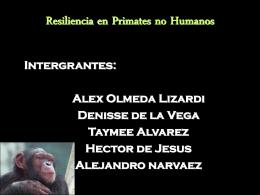 Investigaciones sobre resiliencia en primates no humanos