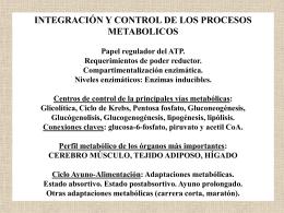 Destinos de Piruvato y de Acetil-CoA