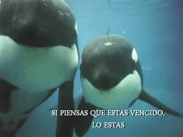 Ballenas Orcas lo que piensas eso seras
