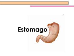 Estomago - Equipos de Salud
