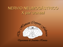 NERVIO NEUMOGASTRICO X