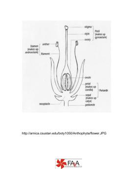 http://arnica.csustan.edu/boty1050/Anthophyta/flower.JPG