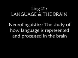 Ling 21: Language & the Brain I