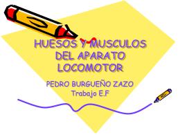 HUESOS Y MUSCULOS DEL APARATO LOCOMOTOR