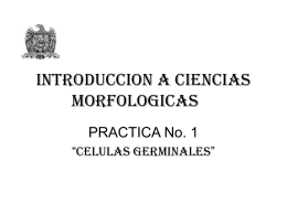 INTRODUCCION A CIENCIAS MORFOLOGICAS