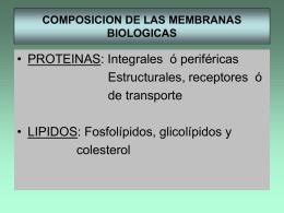CONSTITUCION DE LAS MEMBRANAS