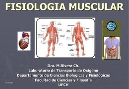 FISIOLOGIA MUSCULAR - Fisiologia 2013 | Las …