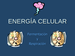How Does A Cell Make Energy?""