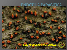 ENDOTHIA PARASITICA