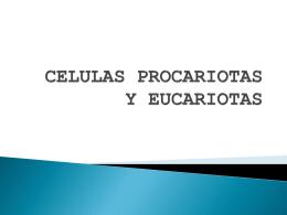 CELULAS PROCARIOTAS Y EUCARIOTAS