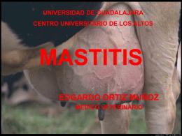 MASTITIS - Franja Morada Veterinaria | FRANJA MORADA