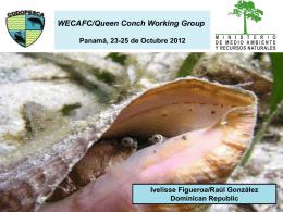 Diapositiva 1 - Strombus gigas, queen conch caribbean