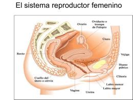 El sistema reproductor femenino