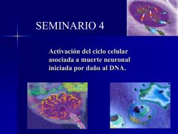 Diapositiva 1 - Departamento de Quimica Biologica