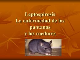 Leptospirosis - // Ministerio de Salud // San Luis