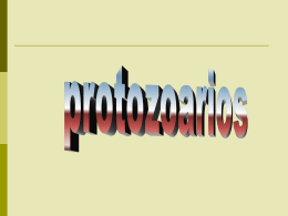 Diapositiva 1 - Microcosmorflores