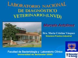 Diapositiva 1 - Maria Cristina Vasquez