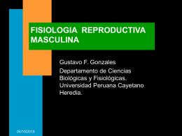 FISIOLOGIA TESTICULAR