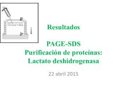 Resultados PAGE-SDS