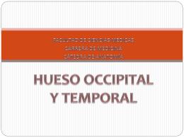HUESO OCCIPITAL