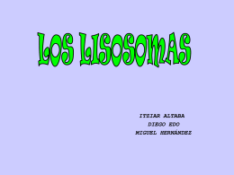 LOS LISOSOMAS - DEMO E