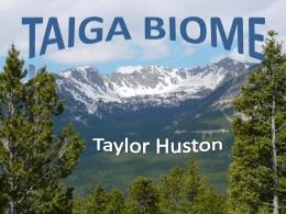 Taiga Biome - Rachel V Salyer's Blog