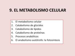 9. EL METABOLISMO CELULAR