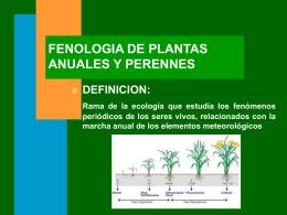 FENOLOGIA DE PLANTAS ANUALES Y PERENNES