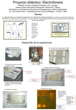 Electroforesis - Facultad de Ciencias Exactas y Naturales