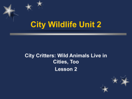 Wild Animals Live in Cities, too!