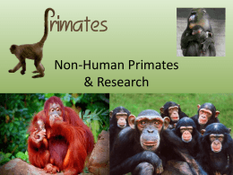 Non-Human Primates & Research
