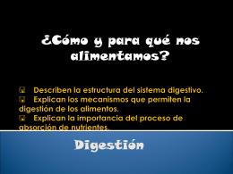 < Describen la estructura del sistema digestivo