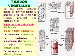 CELULAS PROCARIOTICAS - UPCH