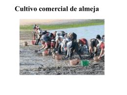 CULTIVO DE ALMEJA - Biblioteca Central de la Universidad