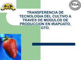 TRANSFERENCIA DE TECNOLOGIA DEL CULTIVO A …