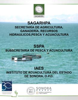 CURRICULUM INSTITUCIONAL - Inicio :: Instituto de