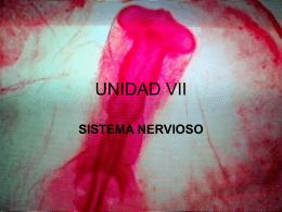 UNIDAD VII