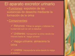 El aparato excretor urinario