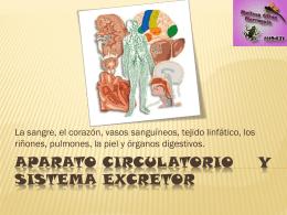 APARATO CIRCULATORIO Y SISTEMA EXCRETOR