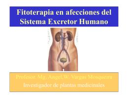 Fitoterapia en afecciones del Sistema Excretor Humano