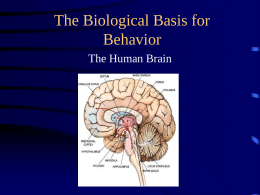 The Biological Basis for Behavior