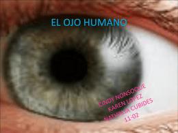 EL OJO HUMANO - fisica11cb2015