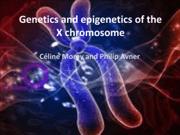 Genetics and epigenetics of the X chromosome