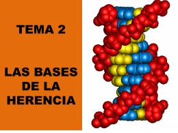 TEMA 2 LAS BASES DE LA HERENCIA