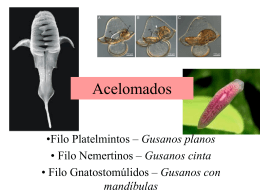 Acelomados